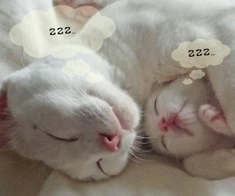 子猫と成猫飼いやすいのはどっちか