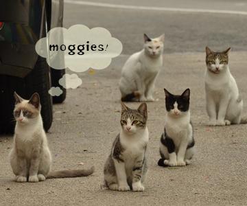 飼いやすい猫の種類