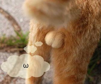猫の去勢と不妊