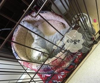 猫のケージでの飼い方