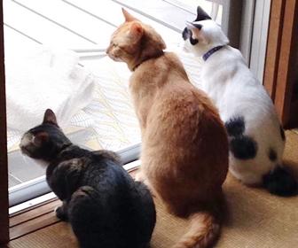 猫が外に出たがる