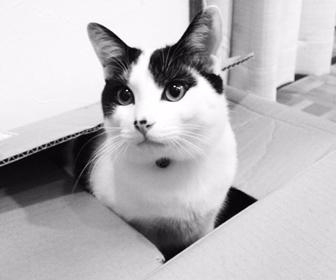 猫の完全室内飼いはかわいそう?