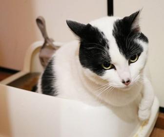 猫トイレのサイズ