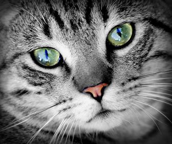 猫の粗相に開き直る