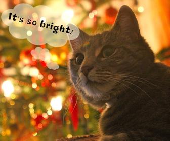 猫のお留守番中の照明