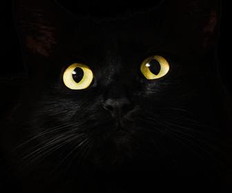 黒猫さんは玄関の照明をつけておく方が良い
