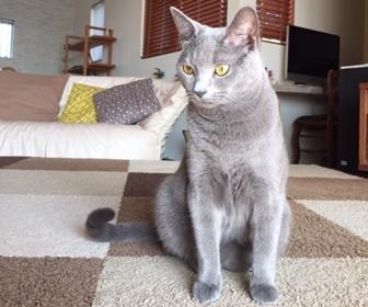 猫を家でお留守番させる方法