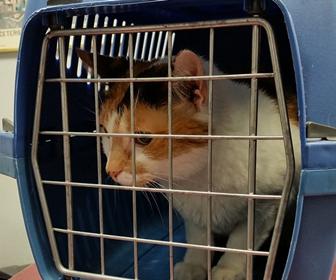 猫のお留守番時に動物病院やペットホテルに預ける