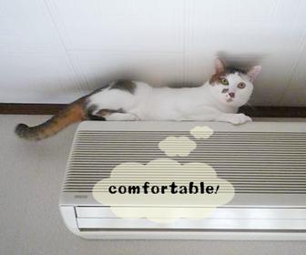 猫のお留守番中のエアコンと暖房