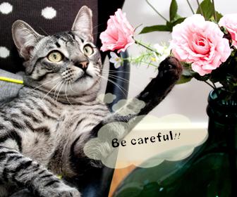 猫とアロマオイルの危険性