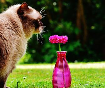 猫とアロマオイル