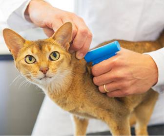 マイクロチップを装着する猫