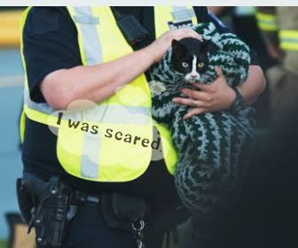 地震など災害時の猫の脱走