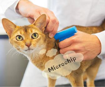 猫のマイクロチップの費用など
