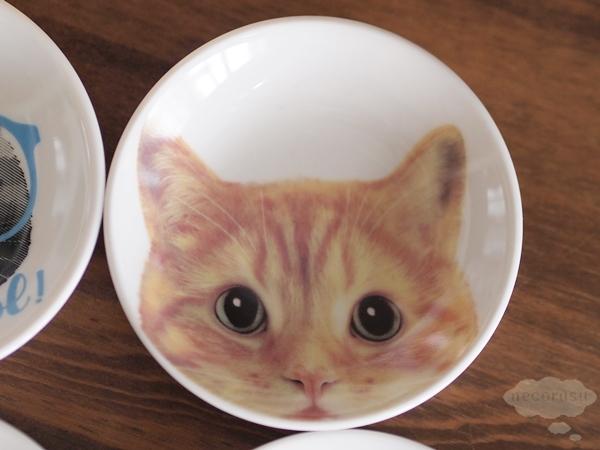 豆皿 猫 フォト 茶トラ