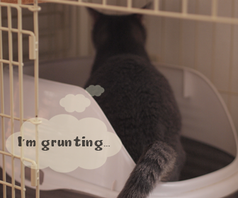 猫トイレ後のうんちハイ