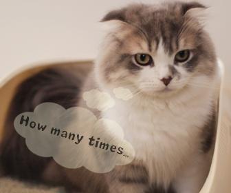 猫のおしっこ・うんち、トイレの回数