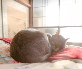 冬の猫のお留守番時の暖房器具設定