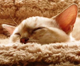 猫の冬のお留守番
