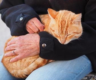 猫のストレス緩和のためにしっかり遊んであげたりかまってあげる