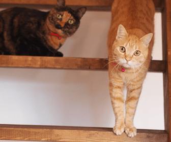 猫可の賃貸物件