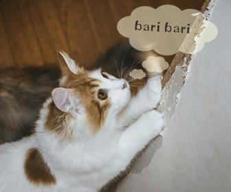 猫の爪とぎのしつけ