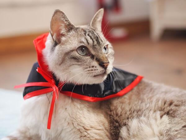 セリアのハロウィン猫マント
