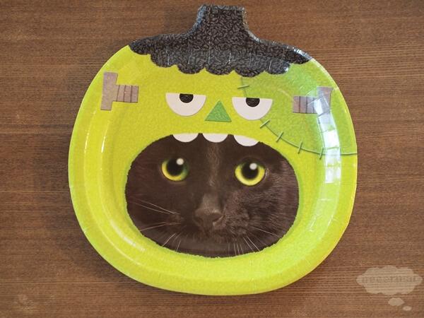 セリアのハロウィン猫紙皿