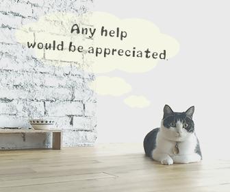 猫のお留守番お世話を頼む際のチェックポイント