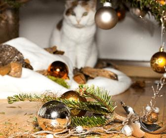 猫のお留守番時の注意点