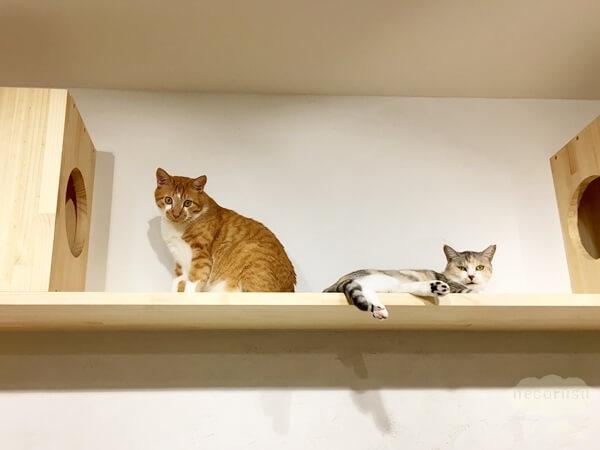 株式会社ハチたまのオフィス猫たち