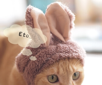 猫と干支にまつわる雑学