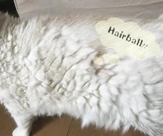 猫の毛玉対策