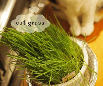 おすすめの猫草と猫草の効果