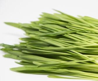 大麦若葉の猫草
