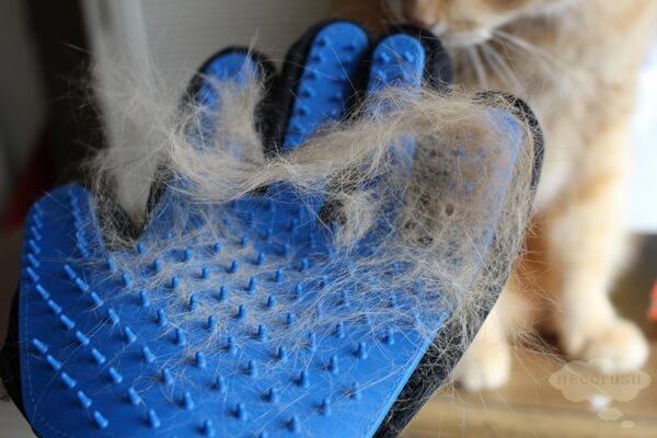 ブラッシンググローブで採れた猫の毛