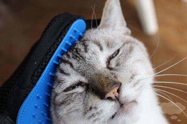 手袋でブラッシングされる猫