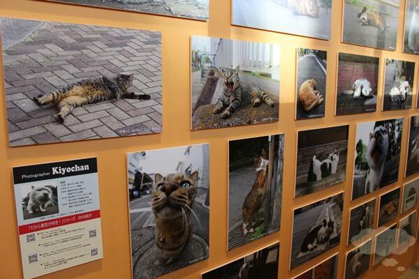 ねこ休み展in横浜みなとみらいの写真パネル