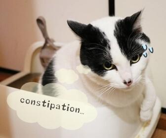 猫の便秘対策と便秘予防