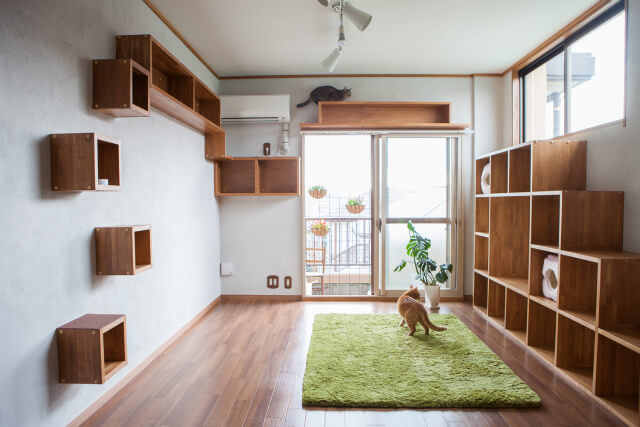 サノスケ不動産の猫のための賃貸住宅、梅が丘ビル見学会