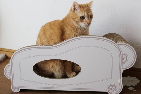 猫用爪とぎ、カリカリーナに座る猫