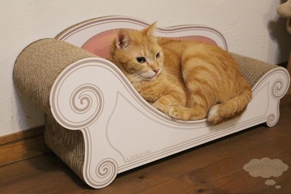 優雅にカリカリーナに座る猫