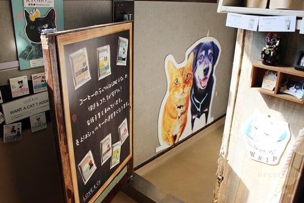 LOVE & Co.さんの保護猫オフィス