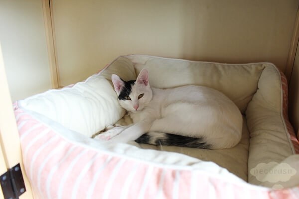 LOVE & Co.さんの保護猫居住スペース