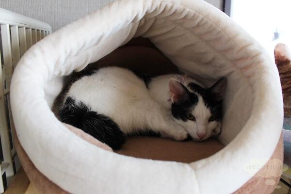 LOVECOの保護猫さん