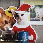 保護猫活動、保護猫譲渡会をおしゃれに!東京世田谷・等々力のLOVE & Co.さんを訪問してきました!