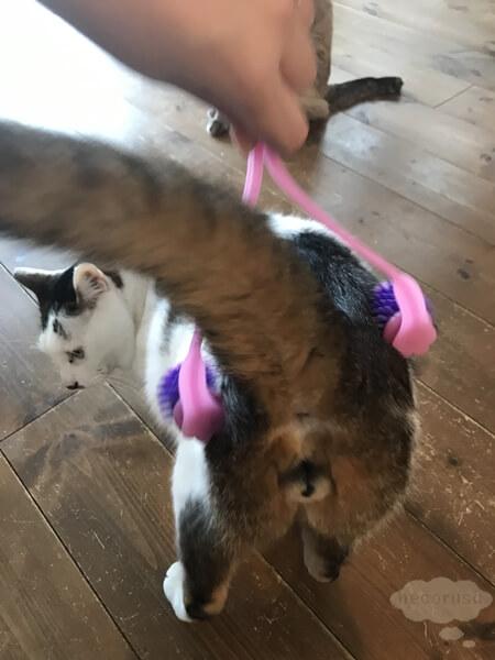 お尻をマッサージされる猫