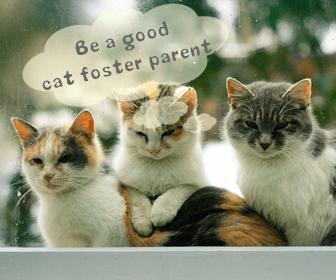 猫の里親審査に落ちたり、条件が厳しい場合