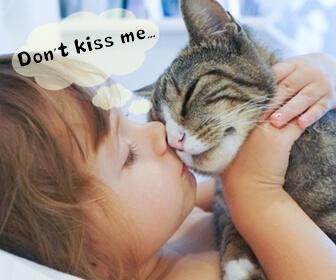 猫にキスするのは危険