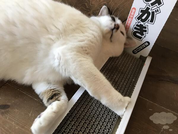 100円ショップで買える猫の爪とぎにスリスリする猫